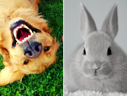 F*ck You, Bunnies - a poem by Ruby The Dog